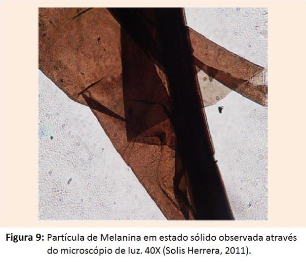 figura-9-einstein-melanina-em-estado-solido-atraves-do-microscopio-de-luz